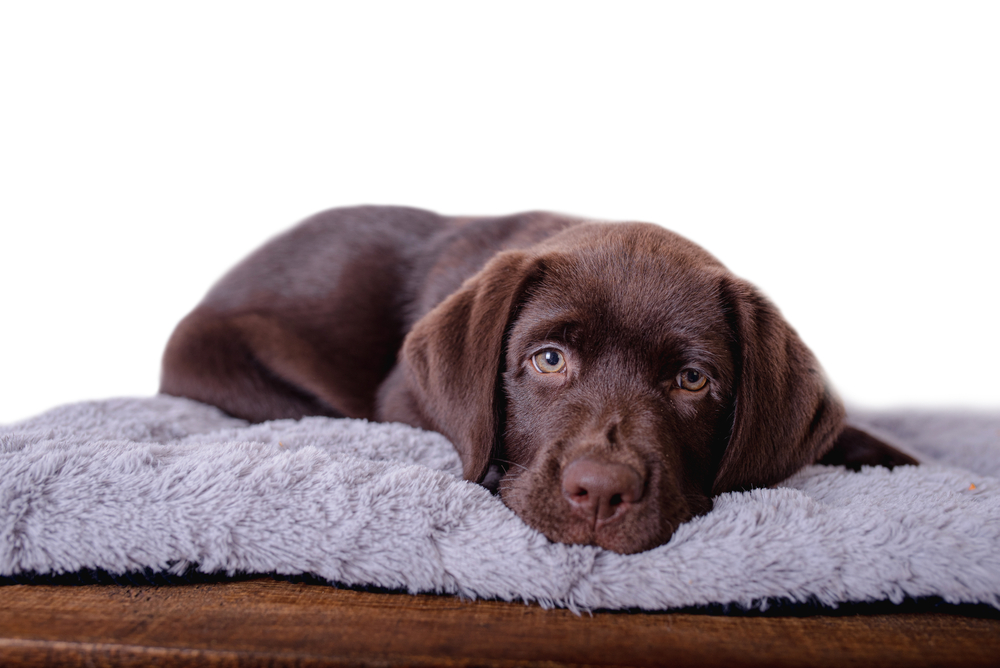 Koelmat voor honden 65x50